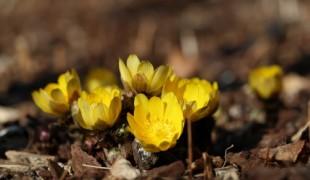 [포토뉴스] 천리포수목원, 이른 꽃의 향연