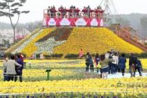 태안의 봄, 꽃으로 물들다!
