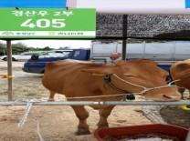 가축 질병진단 337시스템으로 민원만족도 향상